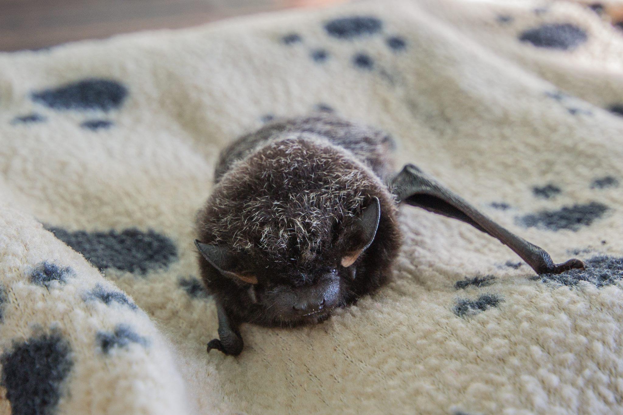 Don't Bat an Eye!   AIWC